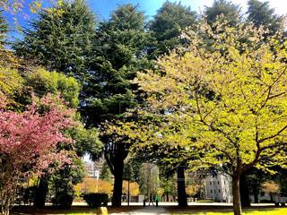 森の大きな木の写真・画像素材[752914]