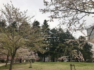 公園の大きな木の写真・画像素材[764414]