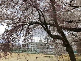 公園の大きな木の写真・画像素材[764449]