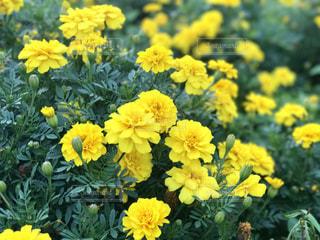 近くに黄色い花のアップ - No.764758