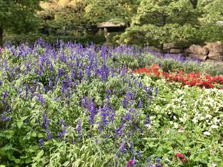 公園の花の写真・画像素材[764785]