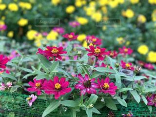 植物にピンクの花の写真・画像素材[764814]