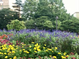 庭の黄色の花 - No.764849
