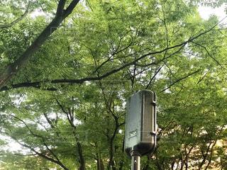 街路樹と信号 - No.764852