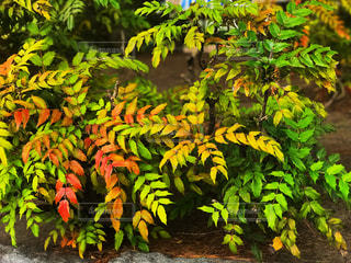 植物の写真・画像素材[766818]