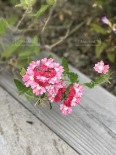 植物にピンクの花の写真・画像素材[783830]