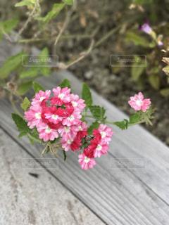 植物にピンクの花の写真・画像素材[783831]