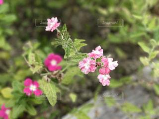 花の写真・画像素材[783853]