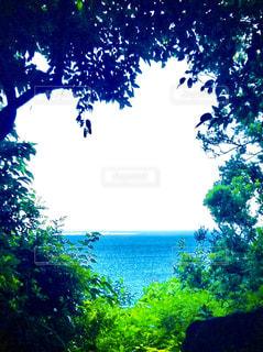 沖縄の景色の写真・画像素材[960221]