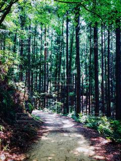 熊野古道 散策の写真・画像素材[960316]