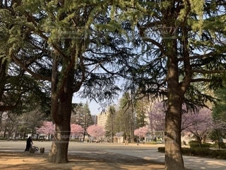 仙台 錦町公園の写真・画像素材[1956541]
