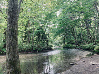 奥入瀬渓流の写真・画像素材[2424499]