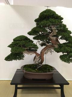 日本 - No.329230