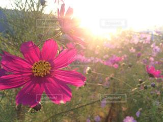 花の写真・画像素材[327696]