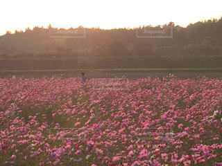 花の写真・画像素材[327698]