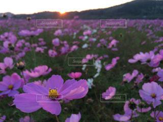花の写真・画像素材[327699]