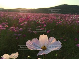 花の写真・画像素材[327700]