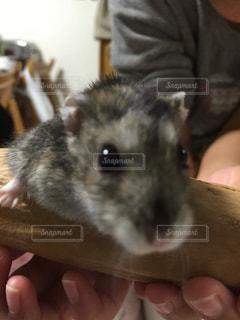 No.326667 動物