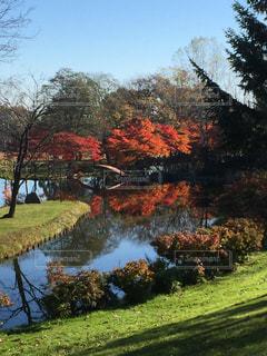庭の写真・画像素材[327072]