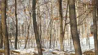 冬の写真・画像素材[377553]