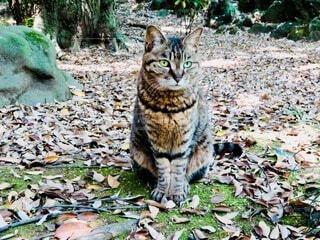 森の中に座ってる猫の写真・画像素材[3918404]