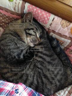 猫の写真・画像素材[326820]