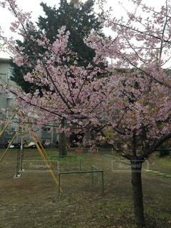 桜の写真・画像素材[328143]
