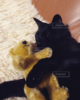 猫の写真・画像素材[326802]