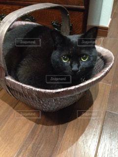 猫の写真・画像素材[327421]