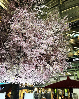 桜の写真・画像素材[698830]