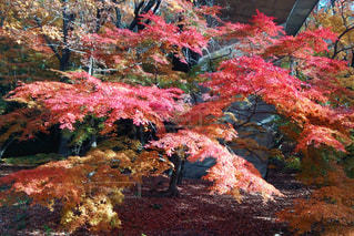 秋の写真・画像素材[698880]