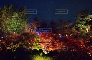 秋の写真・画像素材[698886]