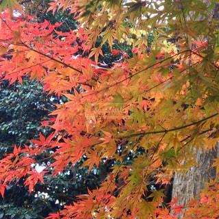 秋の写真・画像素材[698891]