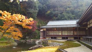 秋の写真・画像素材[698894]