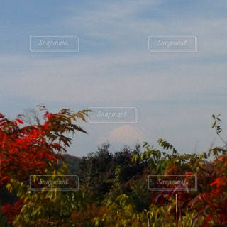 秋の写真・画像素材[698897]