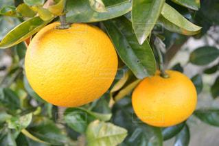果物の写真・画像素材[326995]