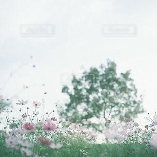 風景の写真・画像素材[7987]