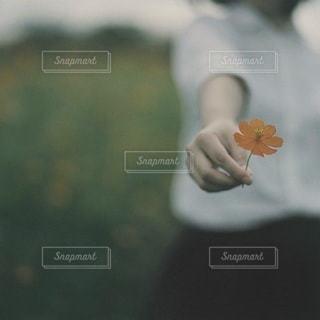 女性の写真・画像素材[7983]