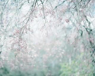 自然の写真・画像素材[7979]