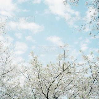 風景の写真・画像素材[7978]