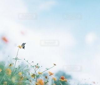 風景,花,きれい,黄色,羽,蝶々