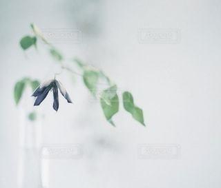 風景の写真・画像素材[7965]