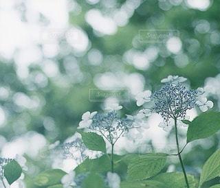 風景の写真・画像素材[7963]