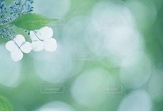 風景の写真・画像素材[7962]