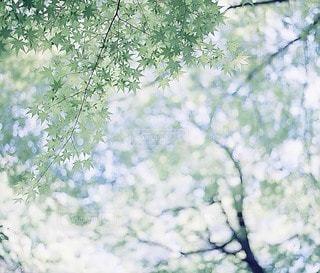 自然の写真・画像素材[7956]