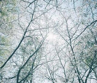 風景の写真・画像素材[7955]