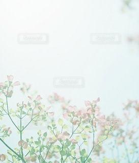 風景の写真・画像素材[7954]