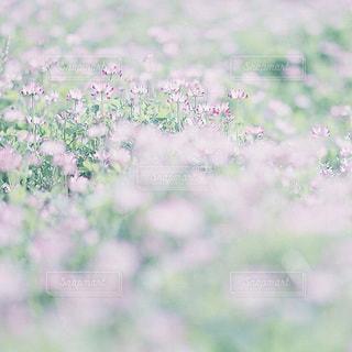 花畑の写真・画像素材[7953]