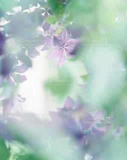 自然の写真・画像素材[7951]