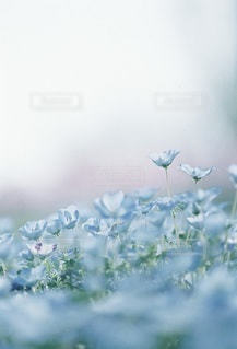 風景の写真・画像素材[7946]